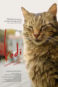 Kedi. Sekretne życie kotów