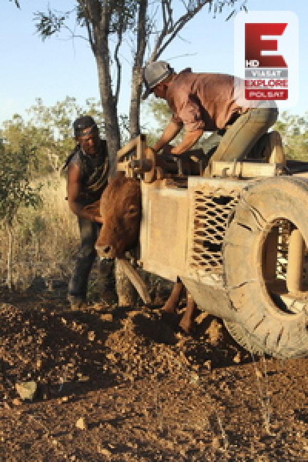 Australijscy łowcy bydła, odc. 10
